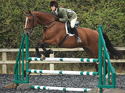 West sussex Livery horse show jumping