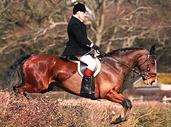 West Sussex Livery horse jumping hedge