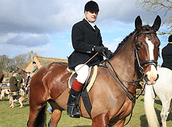 West Sussex Livery Mr P horse hunting