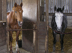 west sussex livery horses in their stables