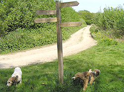 west sussex livery bridle path