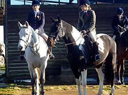 West Sussex Livery horses Dougal and Malley